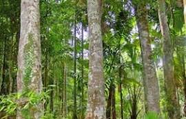 Agarwood Essential Oil