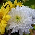 Helichrysum Replacer Essential Oil Blend